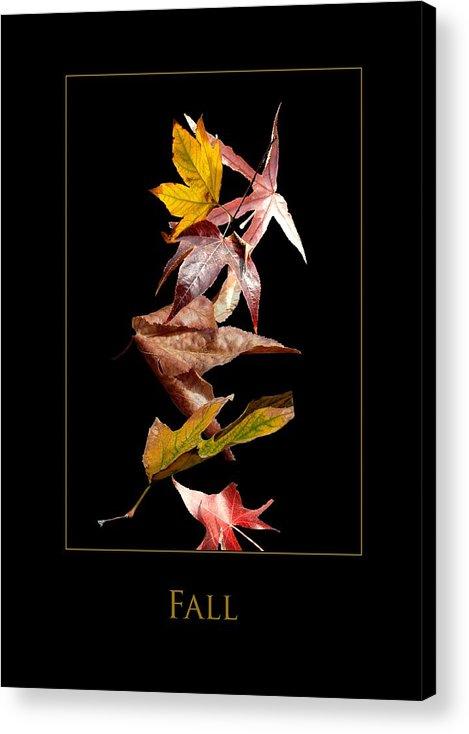 Acrylic Print featuring the photograph Fall by Richard Gordon