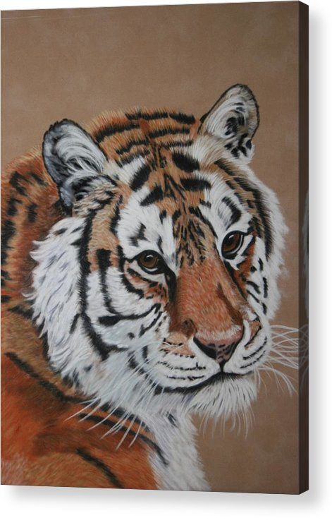 Tiger Acrylic Print featuring the painting Siberian Tiger by Lori DeBruijn