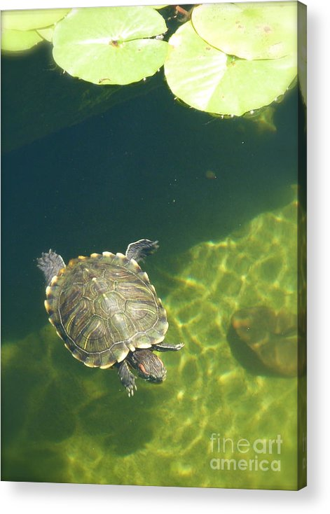 Pond Acrylic Print featuring the photograph Curiosity by Amy Strong