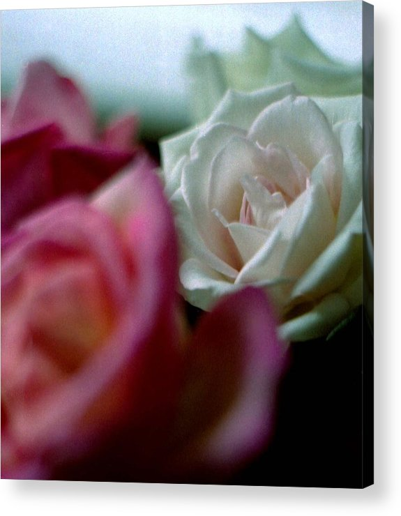 Flowers Acrylic Print featuring the photograph Roses by Michael Morrison