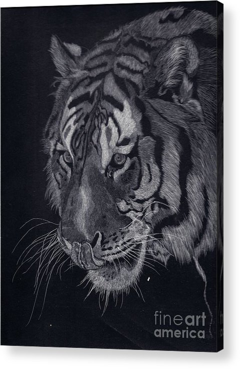 Tiger Acrylic Print featuring the drawing Moquito El Tigre by Yenni Harrison
