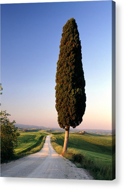 Italy Acrylic Print featuring the photograph Lone Cypress by Michael Hudson