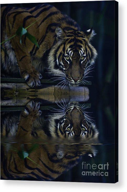 Sumatran Tiger Acrylic Print featuring the photograph Sumatran Tiger Reflection by Sheila Smart Fine Art Photography