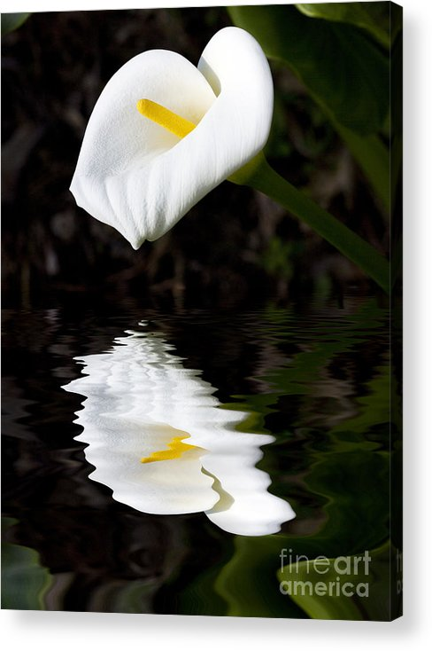 Lily Reflection Flora Flower Acrylic Print featuring the photograph Lily Reflection by Sheila Smart Fine Art Photography