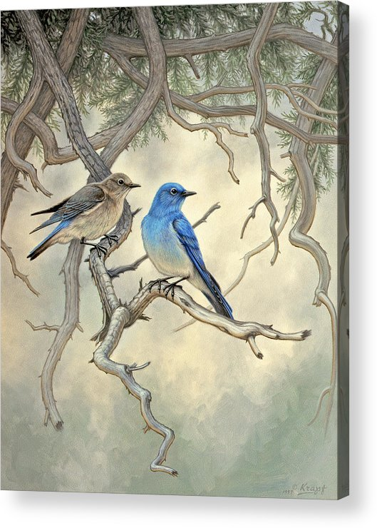 Wildlife Acrylic Print featuring the painting Under the old Juniper-Mountain Bluebirds by Paul Krapf