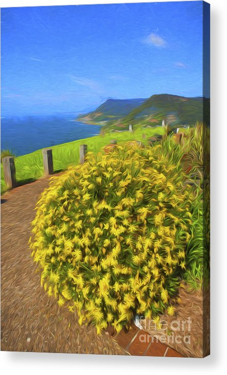Daisies Acrylic Print featuring the photograph Daisies by Sheila Smart Fine Art Photography
