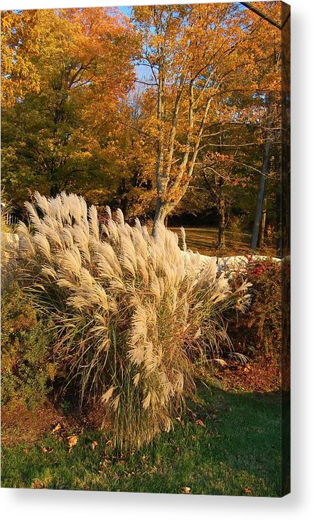 Autumn Acrylic Print featuring the photograph Lost in Gold and Texture by Judy Swerlick