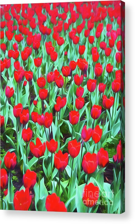 Red Tulips Acrylic Print featuring the photograph Red tulips by Sheila Smart Fine Art Photography