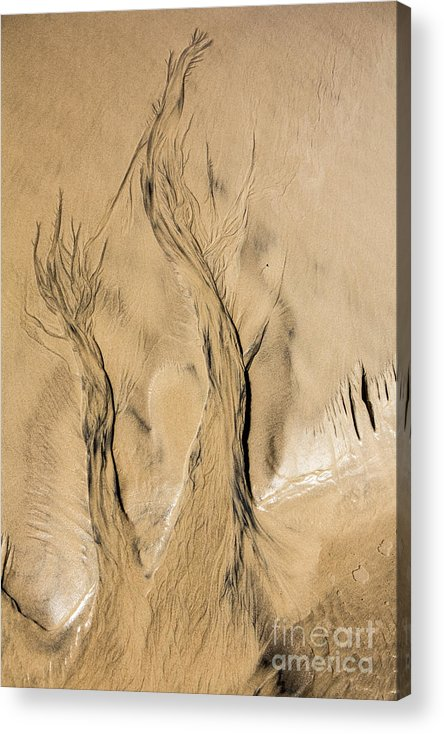 Sand Acrylic Print featuring the photograph Sand Trees by Sheila Smart Fine Art Photography