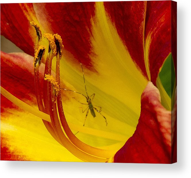 Insect Acrylic Print featuring the photograph Intrusion by Paul Anderson