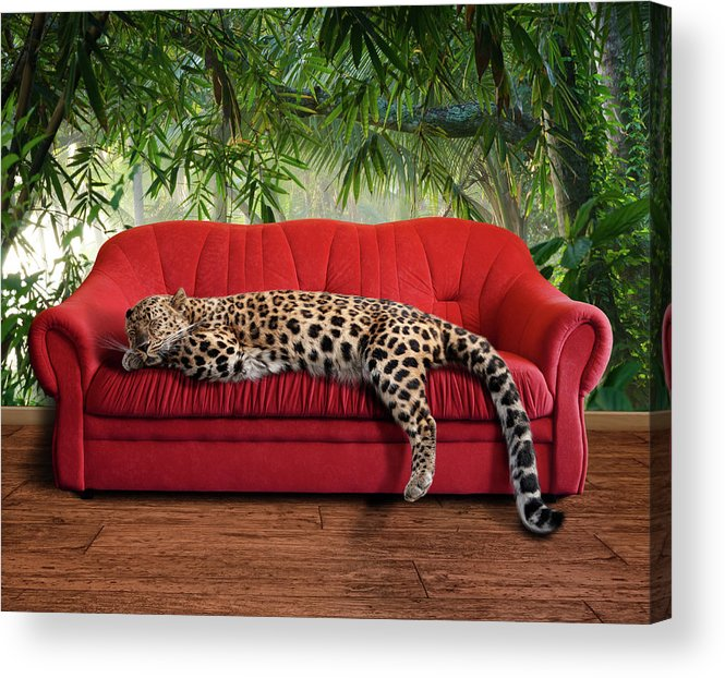 One Animal Acrylic Print featuring the photograph Large Pussy Cat - Leopard Sleeping by Kerrick
