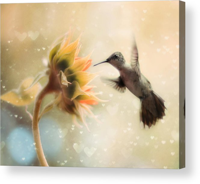 Hummingbird Acrylic Print featuring the photograph Like a Moth To a Flame by Amy Tyler
