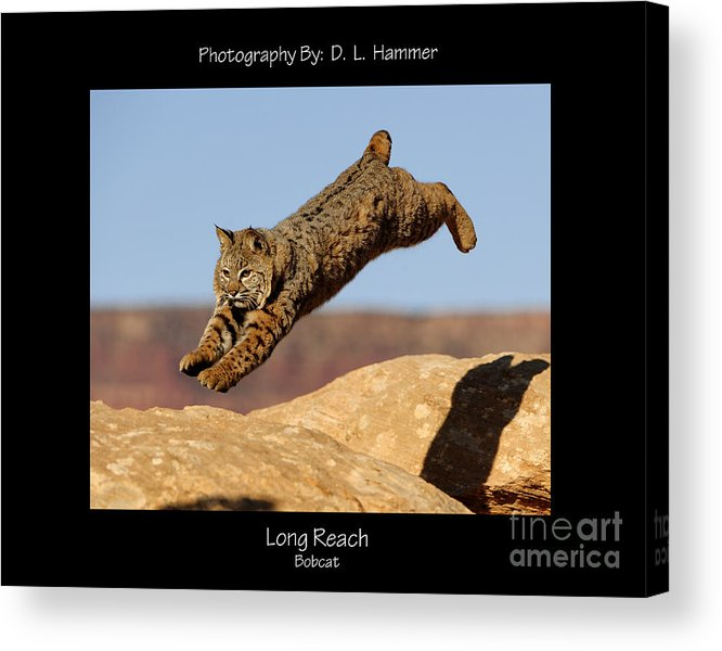 Wildlife Acrylic Print featuring the photograph Long Reach by Dennis Hammer