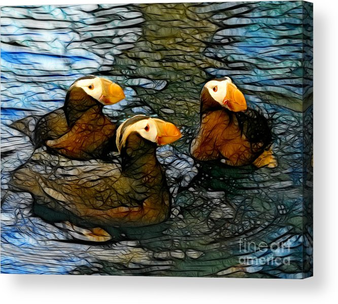 Puffins Acrylic Print featuring the mixed media Puffin Clutch by Francine Dufour Jones
