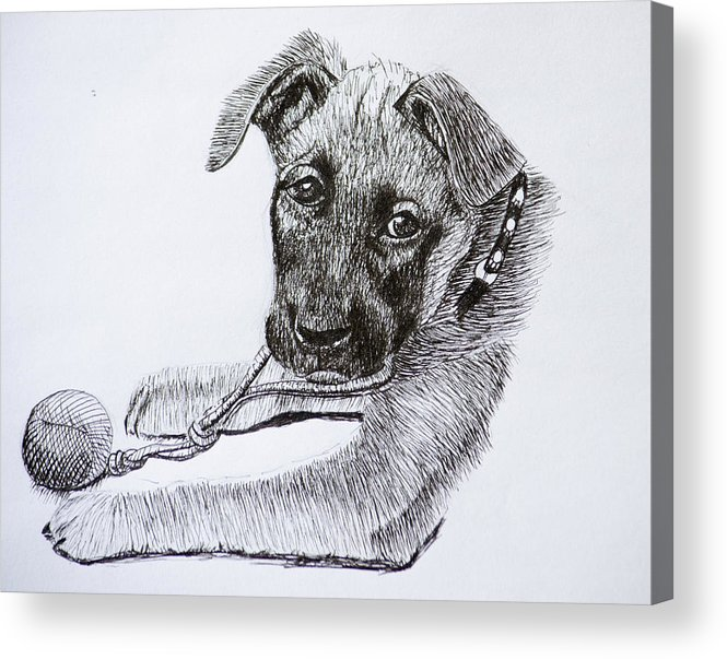 Dogs Acrylic Print featuring the drawing Sheba by Wade Clark