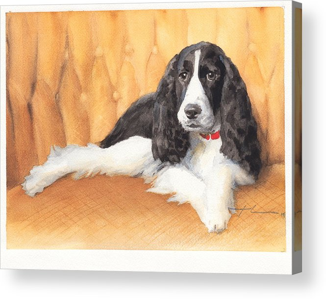 <a Href=http://miketheuer.com Target =_blank>www.miketheuer.com</a> Springer Spaniel Watercolor Portrait Acrylic Print featuring the drawing Springer Spaniel Watercolor Portrait by Mike Theuer