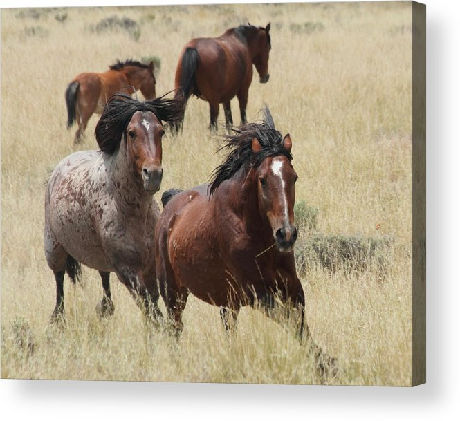 Horse Acrylic Print featuring the photograph Turn by Gene Praag