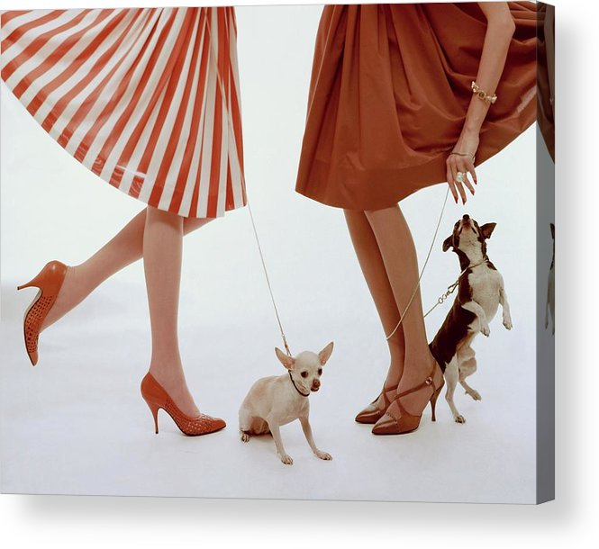 Accessories Acrylic Print featuring the photograph Two Models With Dogs by William Bell
