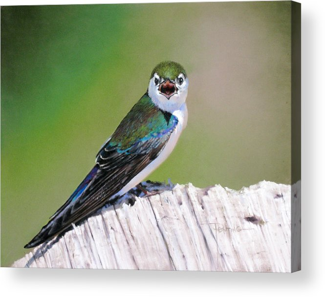 Birds Acrylic Print featuring the painting Violet Green Swallow by Dianna Ponting