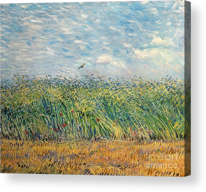 Post-impressionist Acrylic Print featuring the painting Wheatfield with Lark by Vincent van Gogh
