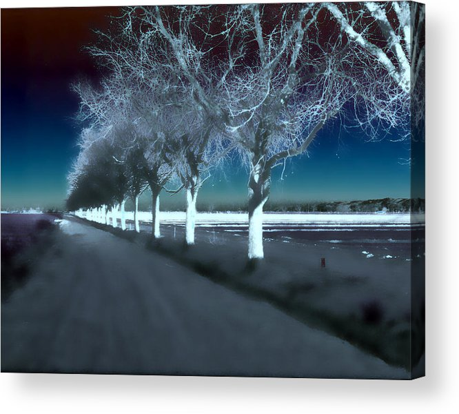 Trees Acrylic Print featuring the photograph Pecan Trees by Jim Painter