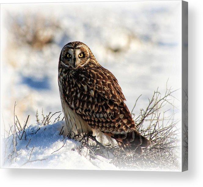 Bird Acrylic Print featuring the photograph The Owl by Gene Praag