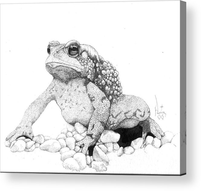 Toad Art Toads Reptile Artist Toad Stool Toader American Spadefoot Acrylic Print featuring the drawing Bufo Americanus by Preston Shupp