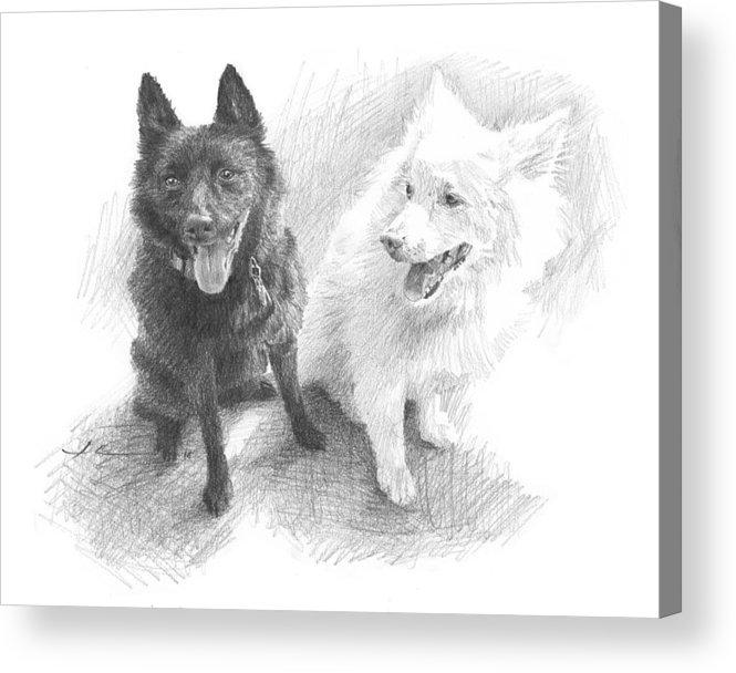 Www.miketheuer.com Black Dog White Dog Drawing Acrylic Print featuring the drawing Black Dog White Dog Drawing by Mike Theuer