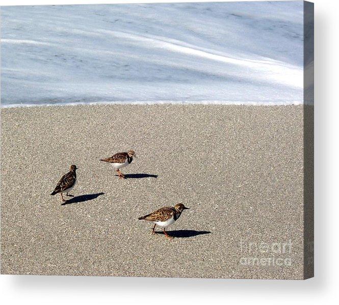 Beach Acrylic Print featuring the photograph Captiva Brids by Elizabeth Klecker