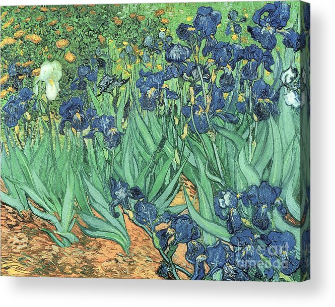Irises Acrylic Print featuring the painting Irises by Vincent Van Gogh by Vincent Van Gogh