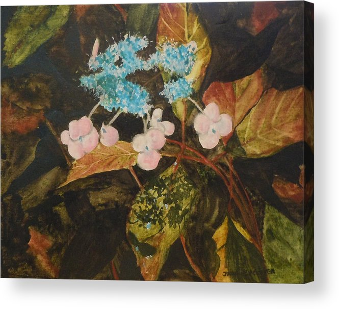 Flowers Acrylic Print featuring the painting Lace Cap 2 by Jean Blackmer