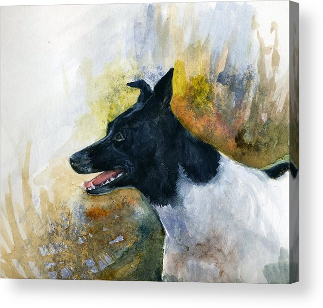 Animal Acrylic Print featuring the painting Our Jack by Jimmie Trotter