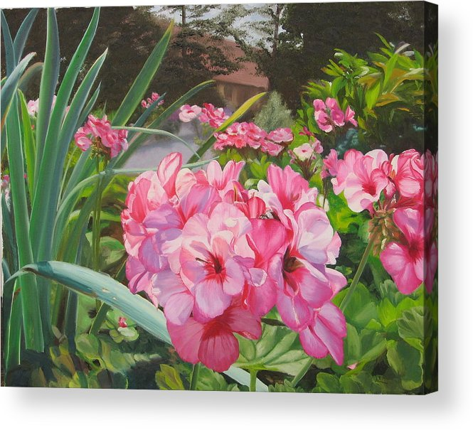 Pink Geraniums Acrylic Print featuring the painting Pink Geraniums by Lea Novak
