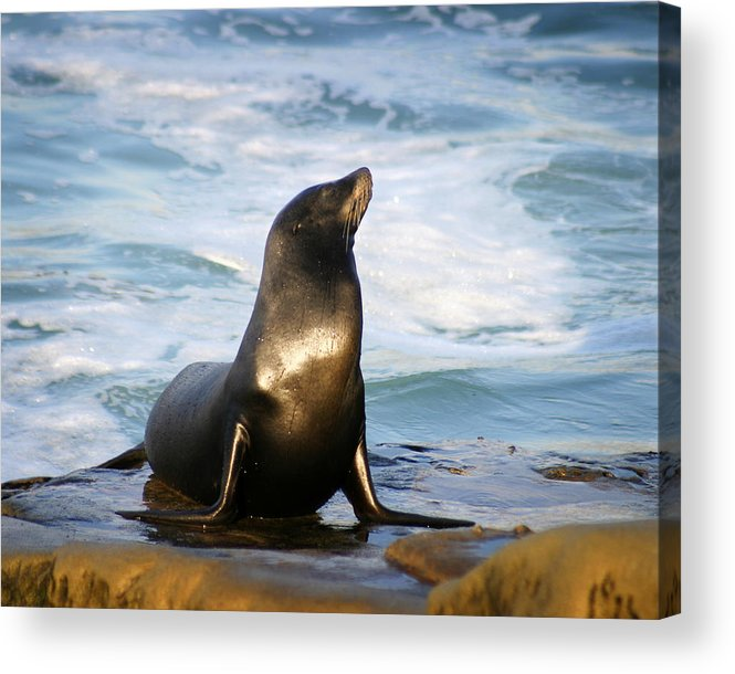 Sealion Acrylic Print featuring the photograph Sealion by Anthony Jones