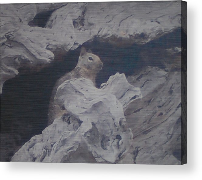 Squirrel Acrylic Print featuring the photograph Silent Observer by Pharris Art
