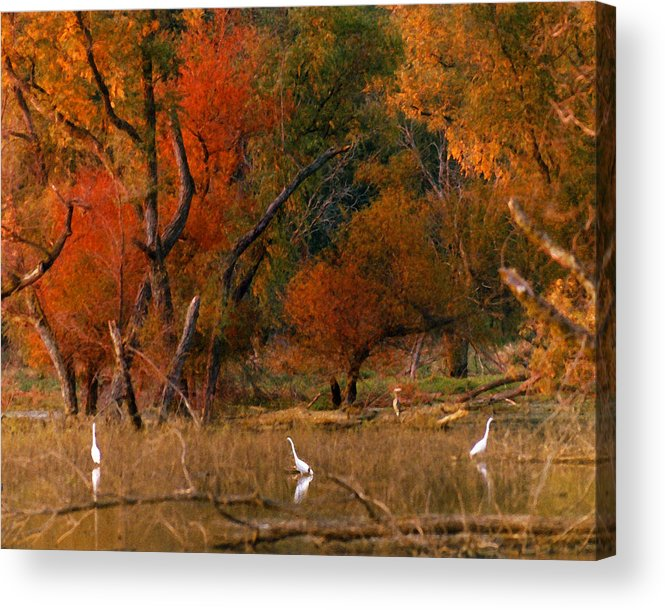 Landscape Acrylic Print featuring the photograph Squaw Creek Egrets by Steve Karol