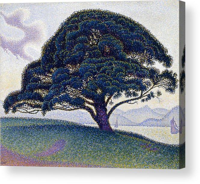Paul Signac Acrylic Print featuring the painting The Bonaventure Pine by Paul Signac