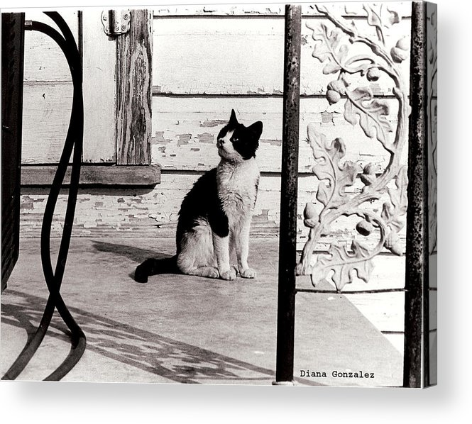 Photograph Acrylic Print featuring the photograph There Once Was by Diana Valadez