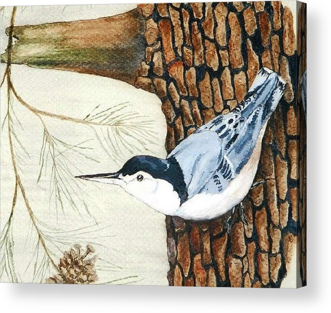 Nuthatch Acrylic Print featuring the painting Upside Down by Debra Sandstrom