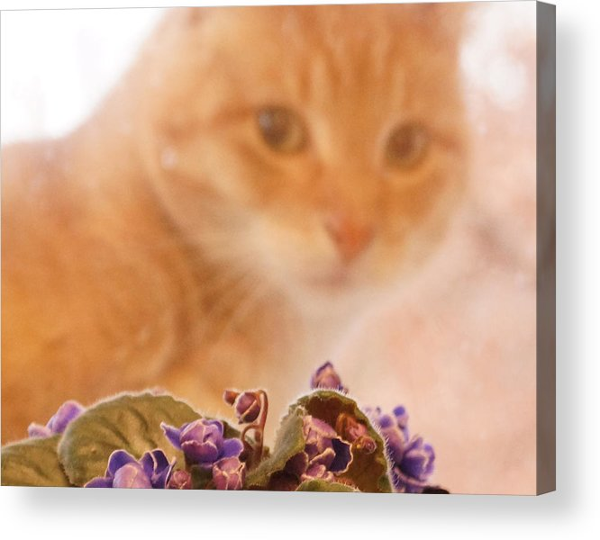 Orange Tabby Cat Acrylic Print featuring the digital art Violets with Cat by Jana Russon