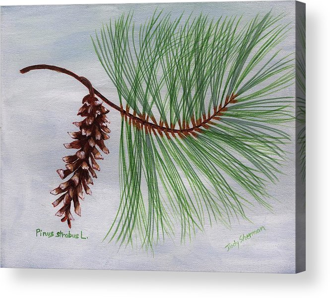 White Pine Cone and Tassel Acrylic Print by Judy Sherman