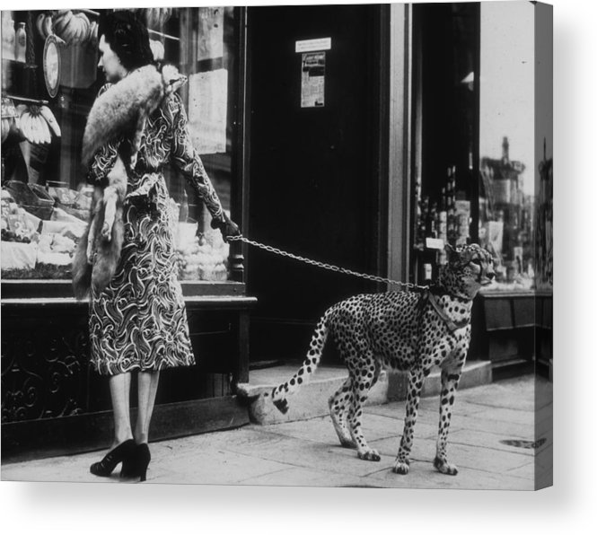 Pets Acrylic Print featuring the photograph Cheetah Who Shops by B. C. Parade