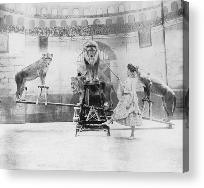 Caucasian Ethnicity Acrylic Print featuring the photograph Female Lion Tamer Performing B&w by Fpg