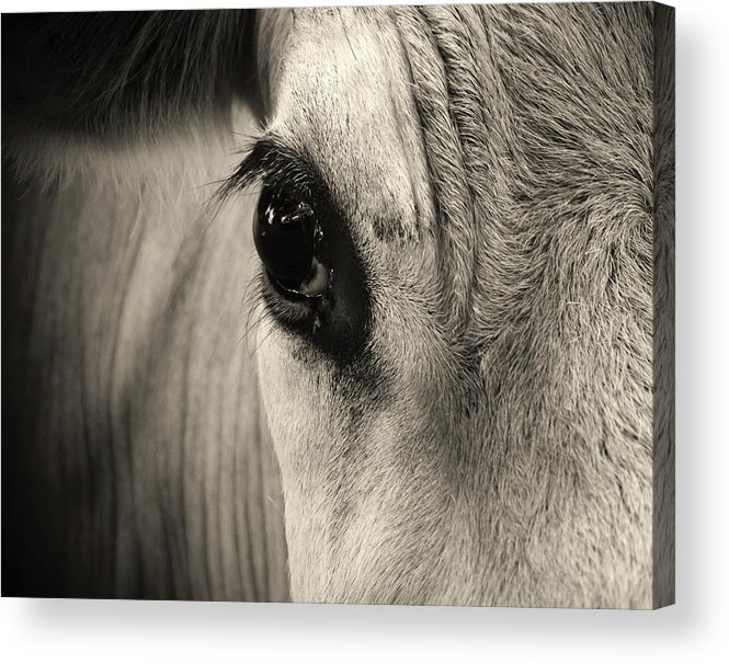 Horse Acrylic Print featuring the photograph Horse Eye by Karena Goldfinch