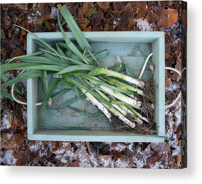 Outdoors Acrylic Print featuring the photograph Leeks In Wooden Box On A Frosty Winter by Dougal Waters