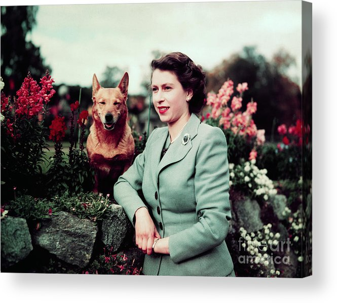 Pets Acrylic Print featuring the photograph Queen Elizabeth In Garden With Dog by Bettmann