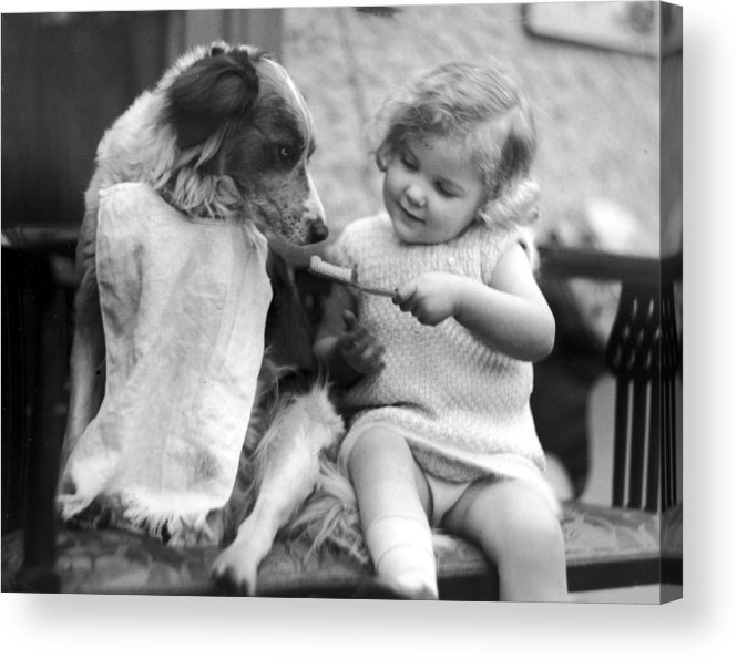 Toddler Acrylic Print featuring the photograph Toddler Trying To Brush Dogs Teeth. P by Time Life Pictures