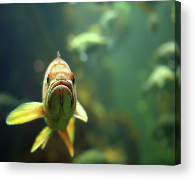 Underwater Acrylic Print featuring the photograph Why The Sad Face by By Jun Aviles