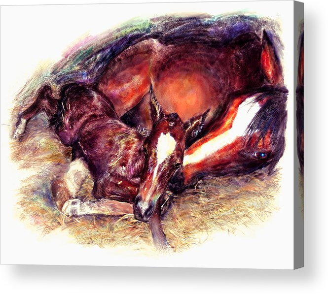 Horse Acrylic Print featuring the painting Awkward First Meeting Arabian Mare With Newborn Foal by Connie Moses