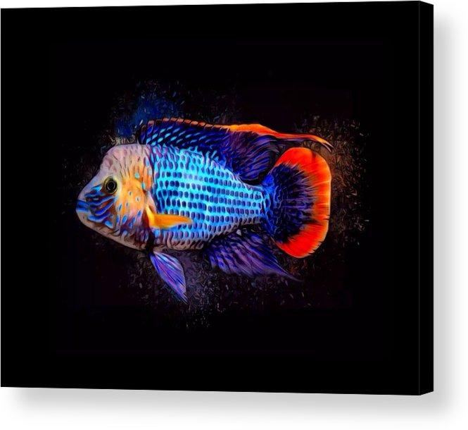 Green Terror Acrylic Print featuring the digital art Green Terror Cichlid Fish by Scott Wallace Digital Designs